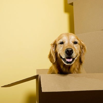 How to Make Moving Easier on Your Pets